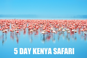 kenyasafari5DAYS