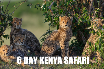 kenyasafari6DAYS