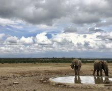 Safari in Kenya: What's it Like?