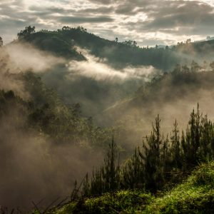 Uganda's Bwindi Impenetrable National Park
