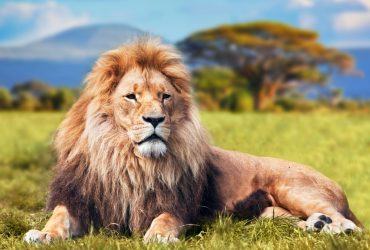 The Uganda Safari Experience