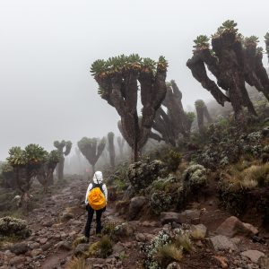 How Long Does it Take to Climb Kilimanjaro?