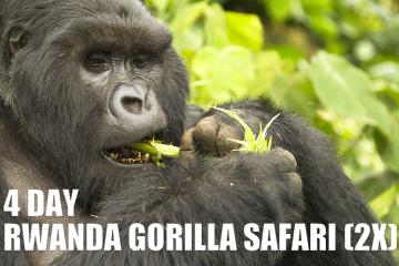4DAYrwandagorillasafarix2