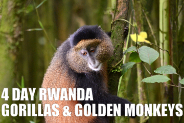 4DAYrwandagorillasgoldenmonkeystour