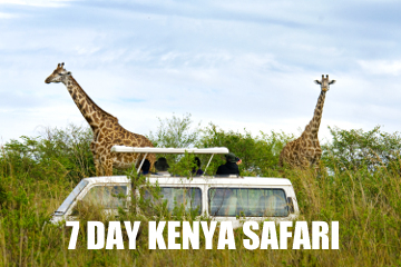 kenyasafari7DAYS
