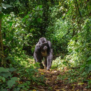 Gorilla Treks: Want Something a Bit Wilder?