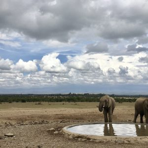 Safari in Kenya: What's it Like?