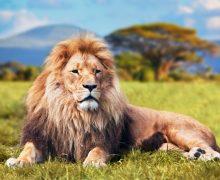 The Uganda and Rwanda Safari Experience