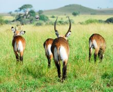 Uganda's Kidepo Valley National Park
