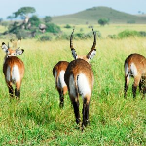 Uganda's Kidepo Valley National Park