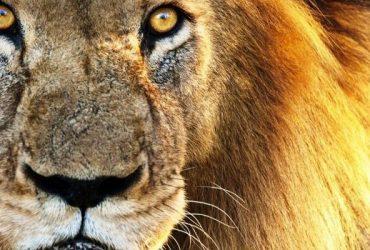 Tanzania Safari Extensions